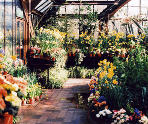 flowers, greenhouse, and plants image