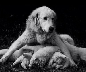dog, mother, and puppy image