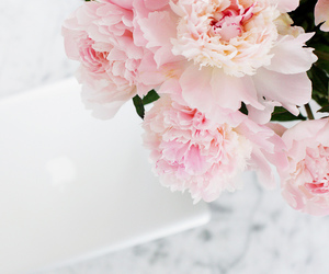 computer, france, and peonies image