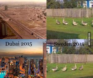 Dubai, sweden, and funny image