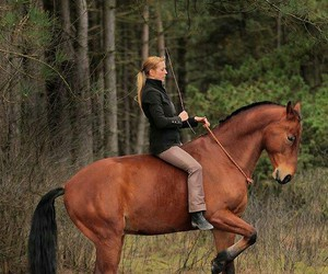 classical, dressage, and free image