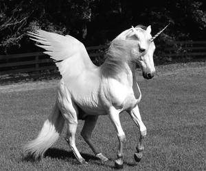 animal, black and white, and feathers image