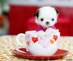 baby animals, pomeranian, and puppy image