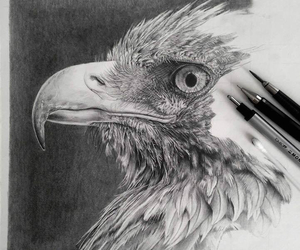 draw, art, and eagle image