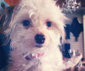 dog, pretty, and chinese crested dog image