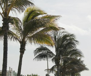 holiday and palm tree image