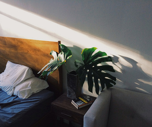 house, plants, and home image