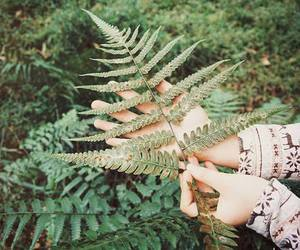 fern, photography, and plant image