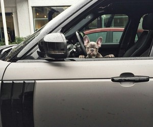 car, dog, and french bulldog image