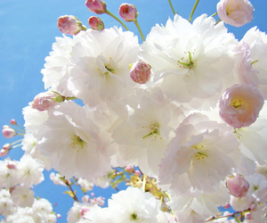 beautiful, blossoms, and spring image