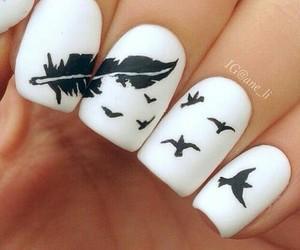 nails, bird, and white image