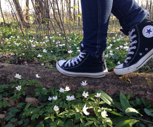 plants, black, and converse image