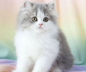 cat, animal, and lovely image