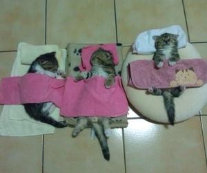 cat, kitten, and sleep image