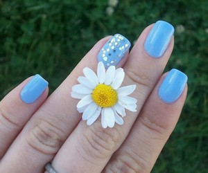 blue nails, daisy, and flower image