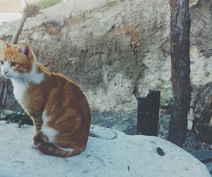 Athens, Greece, and cat image