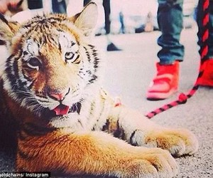 fashion, shoes, and raawr image