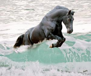 horse, water, and black image