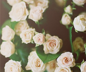 flores, rosas, and hermosas image