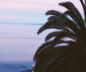 palm trees, sunset, and ocean image