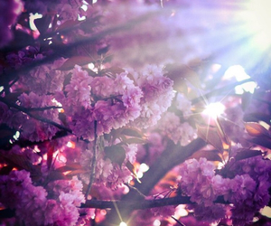 flowers, spring, and sunlight image