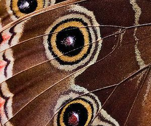brown, butterfly, and circles image