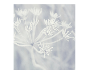 crystals, frozen, and flower image