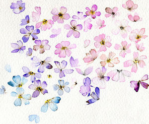 flowers, pink, and blue image