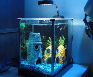 spongebob, bob esponja, and aquarium image
