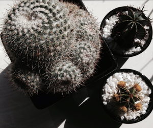 cactus, iphone, and pale image