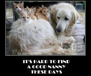 cats, dog, and funny image