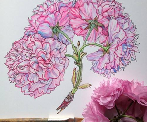 flowers, drawing, and pink image