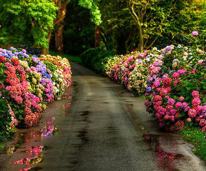flowers, nature, and colors image