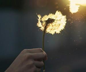 flowers, sun, and dandelion image