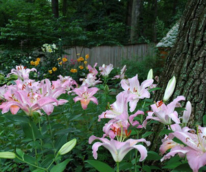 pink, flowers, and forest image