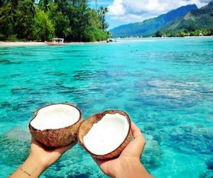 beach, coconuts, and vacation image