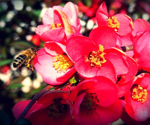 bee and spring image