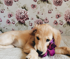 angel, puppy, and cute image