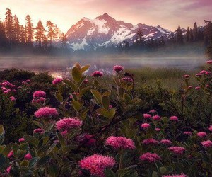 flower, nature, and forest image