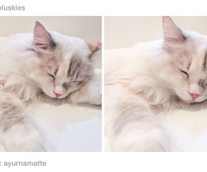 soft, kitten, and tumblr image