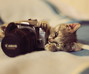 camera, cat, and little image