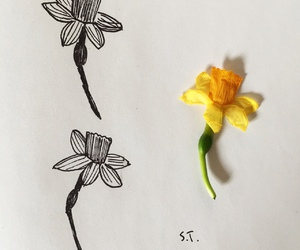 art, flower, and tumblr image