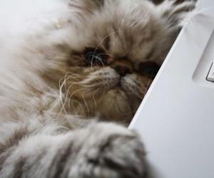 bella, cat, and mac image