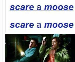 supernatural, moose, and dean winchester image