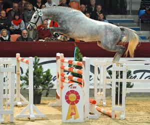 horse, jump, and jumping image