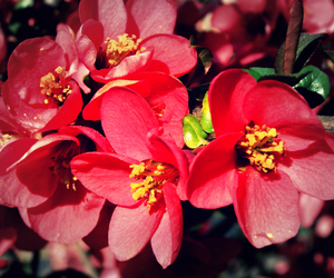 flowers, red, and spring image