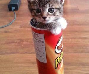 cat, cute, and pringles image
