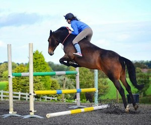 horse, equestrian, and jumping image