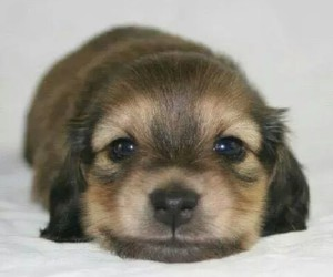dog, handsome, and cute image