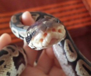 baby, pretty, and snake image